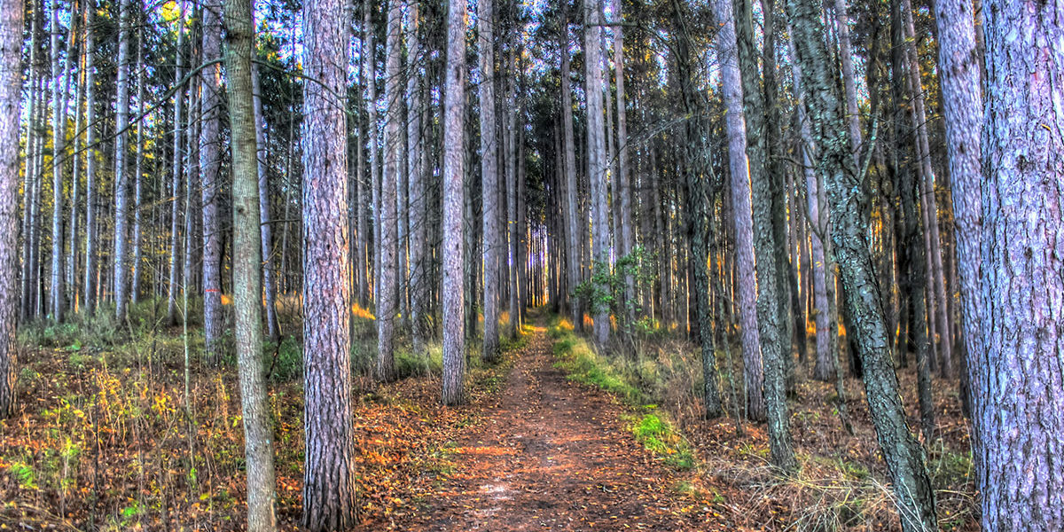 Kettle State Moraine Forest, Forest, Thick Forest, Beautiful Forest