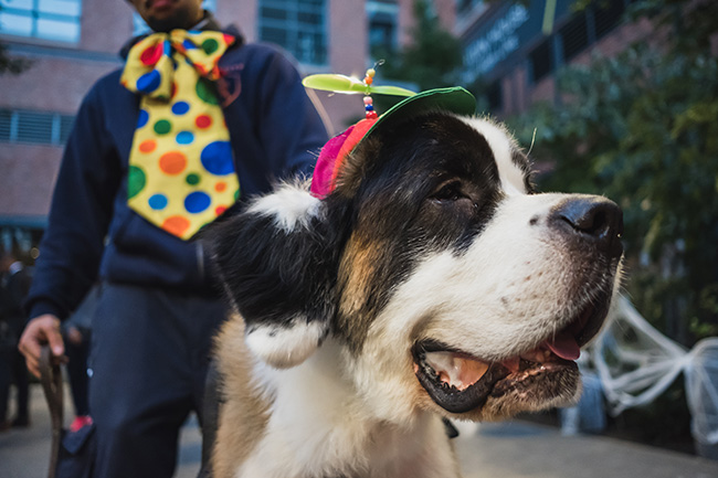propeller for dogs, cute dog costume ideas