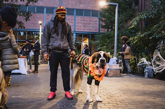 big dog, dog costume ideas, bob marley inspired