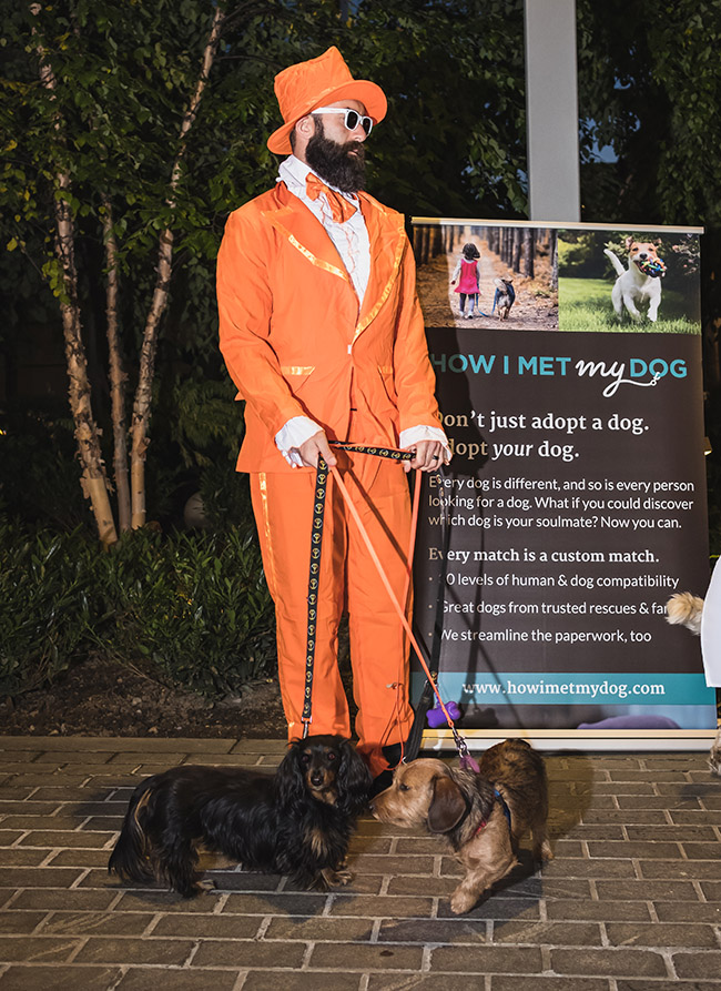 dogs with owner, walking dogs, costume