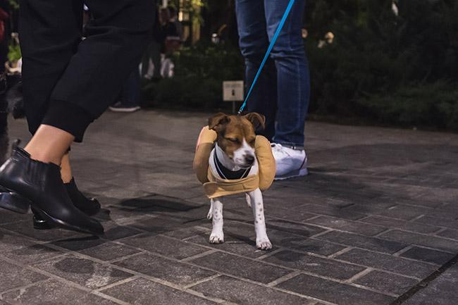 angry dog, blinking dog, hot dog costume