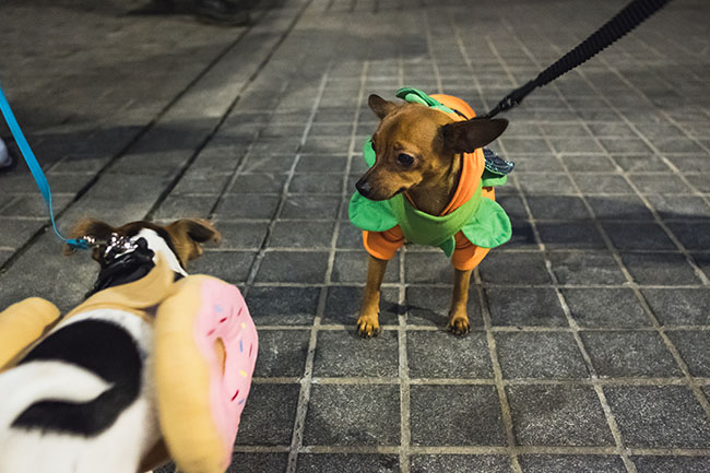 donuts, pumpkins, halloween inspiration for dogs