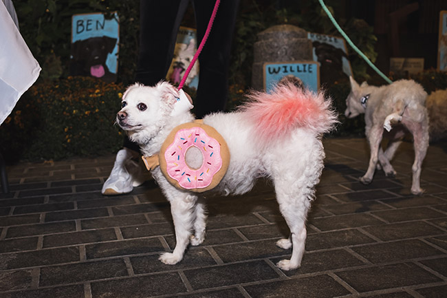 dogs as donuts, good costume ideas for dogs, strawberry frosted