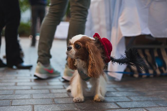 renaissance dog, creative costume ideas for dogs, DIY costume