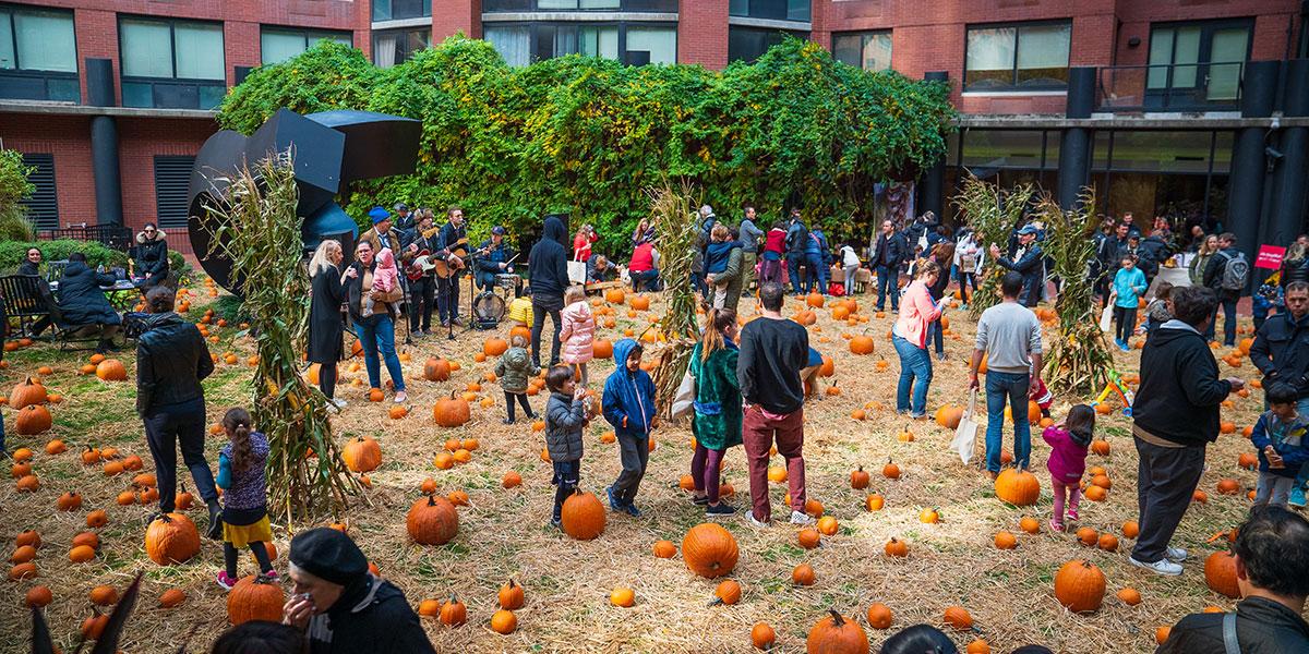 pumpkin patch, pumpkin patch tribeca, tribeca pumpkins, pumpkin patch nyc