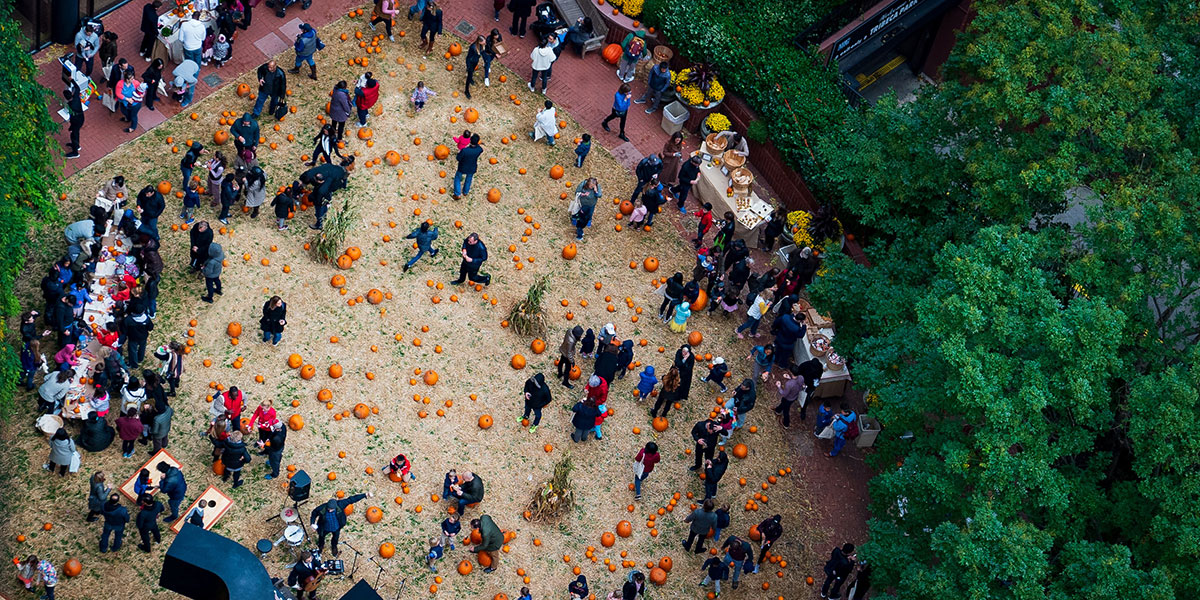 pumpkin patch, pumpkin patch nyc, pumpkin patch tribeca