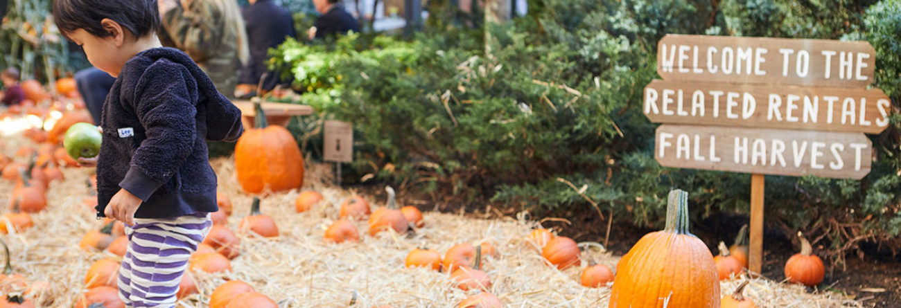 pumpkin patch, pumpkin patch in New York