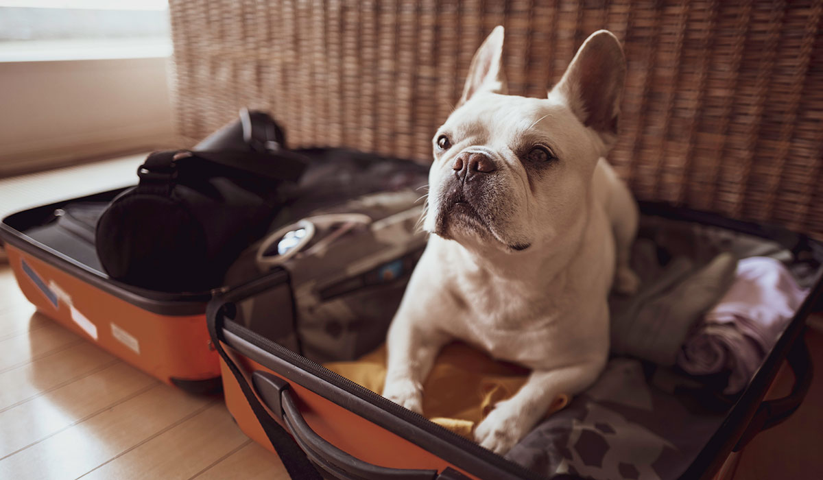 dog in suitcase, suitcase with dog